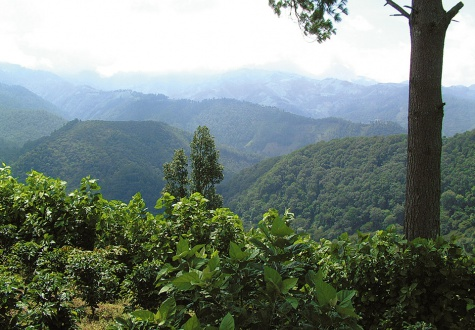 Origins of the best: how illy coffee is grown